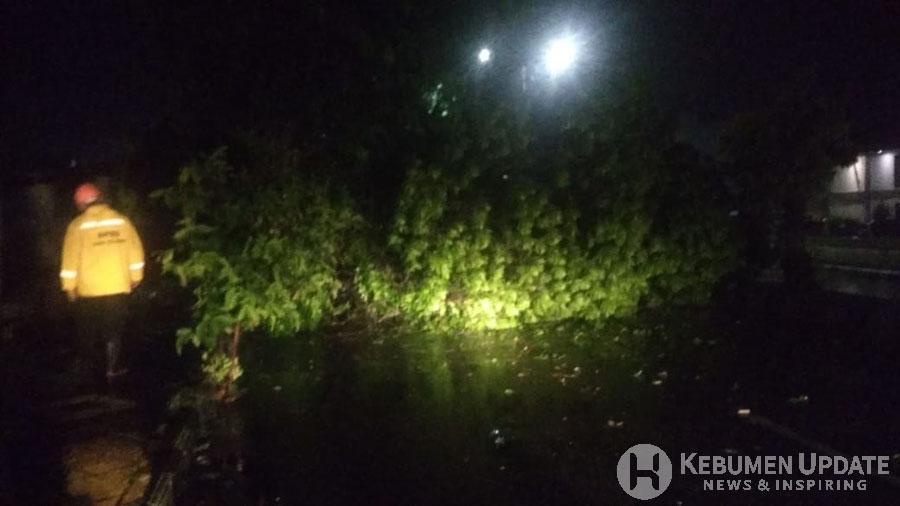 Petugas PLN saat akan mengevakuasi pohon tumbang. (Foto: Istimewa)