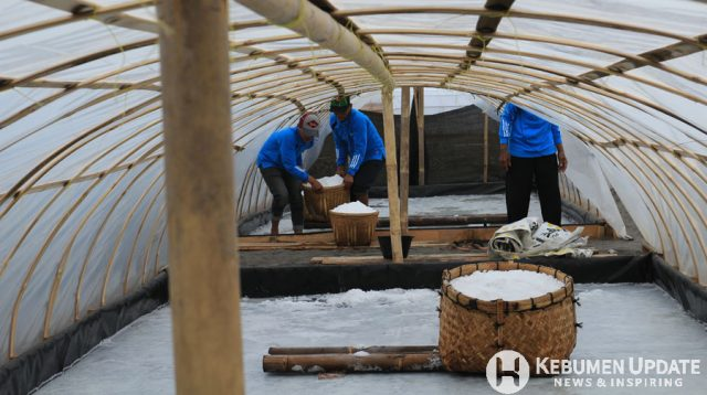Petani garam sedang memanen garam di Kampung Garam Kebumen. (Foto: Humas Kebumen)