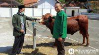 Wabup Arif Sugiyanto menyerahkan hewan kurban untuk Masjid Agung Kebumen. (Foto: Padmo-KebumenUpdate)