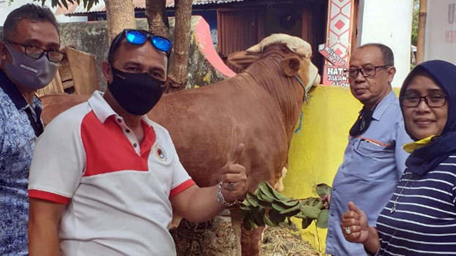 Ketua DPD Partai Golkar berpose dengan latar belakang sapi kurban. (Foto: Istimewa)